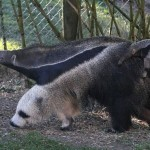 animals 11