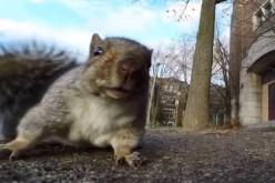 Սկյուռիկը գողանում է տեսախցիկն ու փախչում (տեսանյութ)