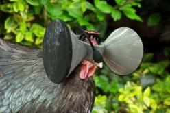 Ստեղծվել է հավերի համար նախատեսված վիրտուալ ակնոց