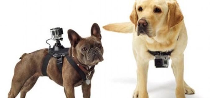 Ստեղծվել է GoPro խցիկների Fetch ամրակալ՝ ընտանի կենդանիների համար