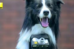 Nikon-ի շնորհիվ շները կկարողանան լուսանկարել հուզիչ պահերը (տեսանյութ)