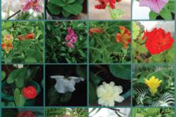 EcoScan: Plants հայկական հավելվածը կնպաստի կենսաբազմազանության պահպանմանը