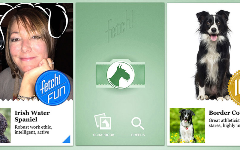 Microsoft-ի նոր ծրագիրը կարող է որոշել Ձեր շան ցեղատեսակը
