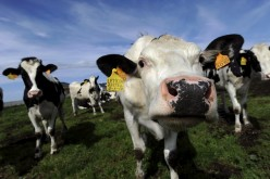 Google որոնողական համակարգն ունի կենդանիների ձայներ հանող գաղտնի հնարավորություն