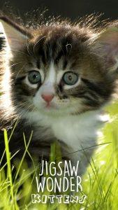 jigsaw-wonder-kittens
