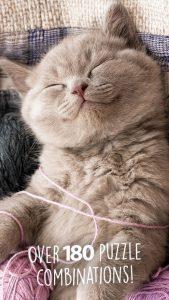 jigsaw-wonder-kittens1