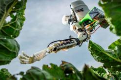 Բերք հավաքող  ռոբոտները կփոխարինեն միգրանտներին