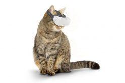 AR և VR  գլխարկ կատուների համար (տեսանյութ)