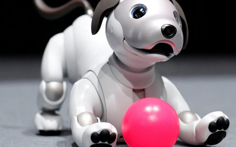 Չինացի ուսանողը միայնակ մարդկանց համար ռոբոտ շուն է ստեղծել
