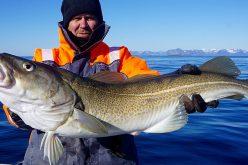 Նորվեգիայում սատկած ձկներից նավի «վառելիք» կստեղծվի