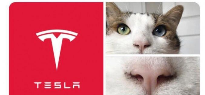 Ի՞նչ է նշանակում Tesla-ի տարբերանշանը․ բացահայտել է Էլոն Մասկը
