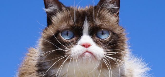 Instagram-ում հայտնի Grumpy Cat-ն այլևս չկա