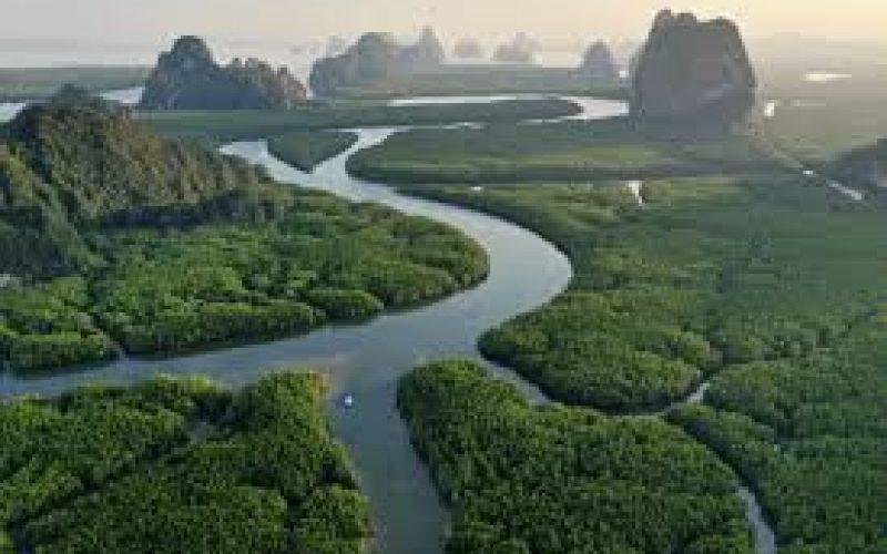 Apple-ը միջոցներ կհատկացնի Ամազոնի անտառների վերականգնման համար