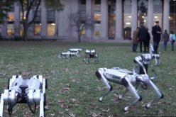ԱՄՆ-ում զբոսանքի են հանել ռոբոտ շներին