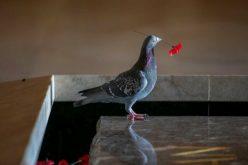 Արհեստական կակաչներից հյուսված բույնը. լուսանկար
