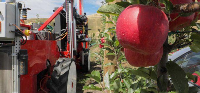 Ճապոնացիները կօգնեն խնձոր հավաքելու համար ռոբոտներ ստեղծել