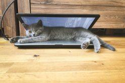 Համակարգիչներն ու կատուները. պատկերասրահ