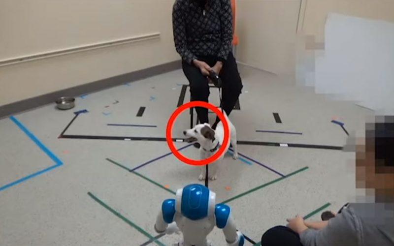 Շները ենթարկվել են ռոբոտների հրամաններին (տեսանյութ)