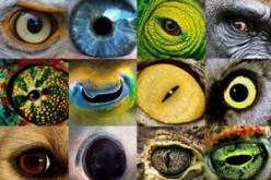 Ինչպես տեսնել աշխարհը կենդանիների աչքերով (վիդեո)