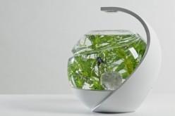 Ակվարիում, որի ջուրը փոխելու կարիք չկա (վիդեո)