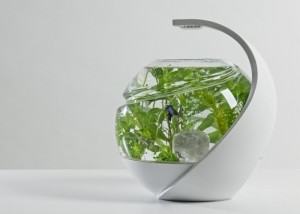 Self-Cleaning-Fish-Tank